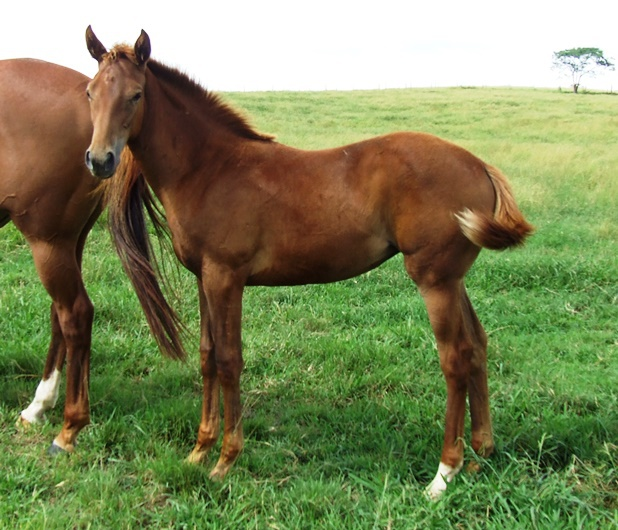 Turffontein x Blessed Anna Filly